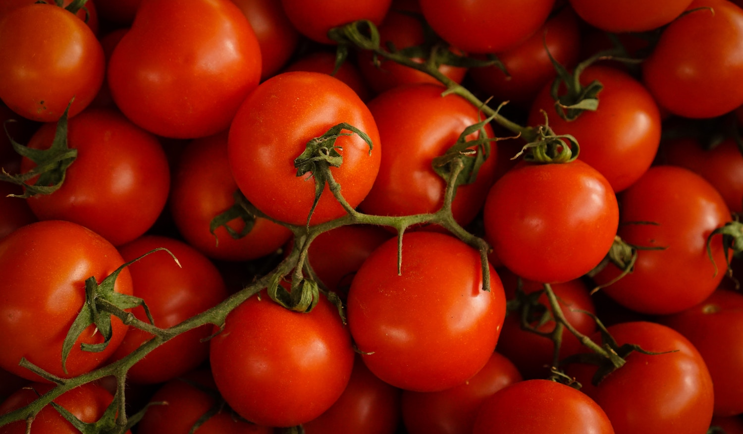 From Tomato Vine to Tomato Sauce: A Look into the Visibility Traceability Provides