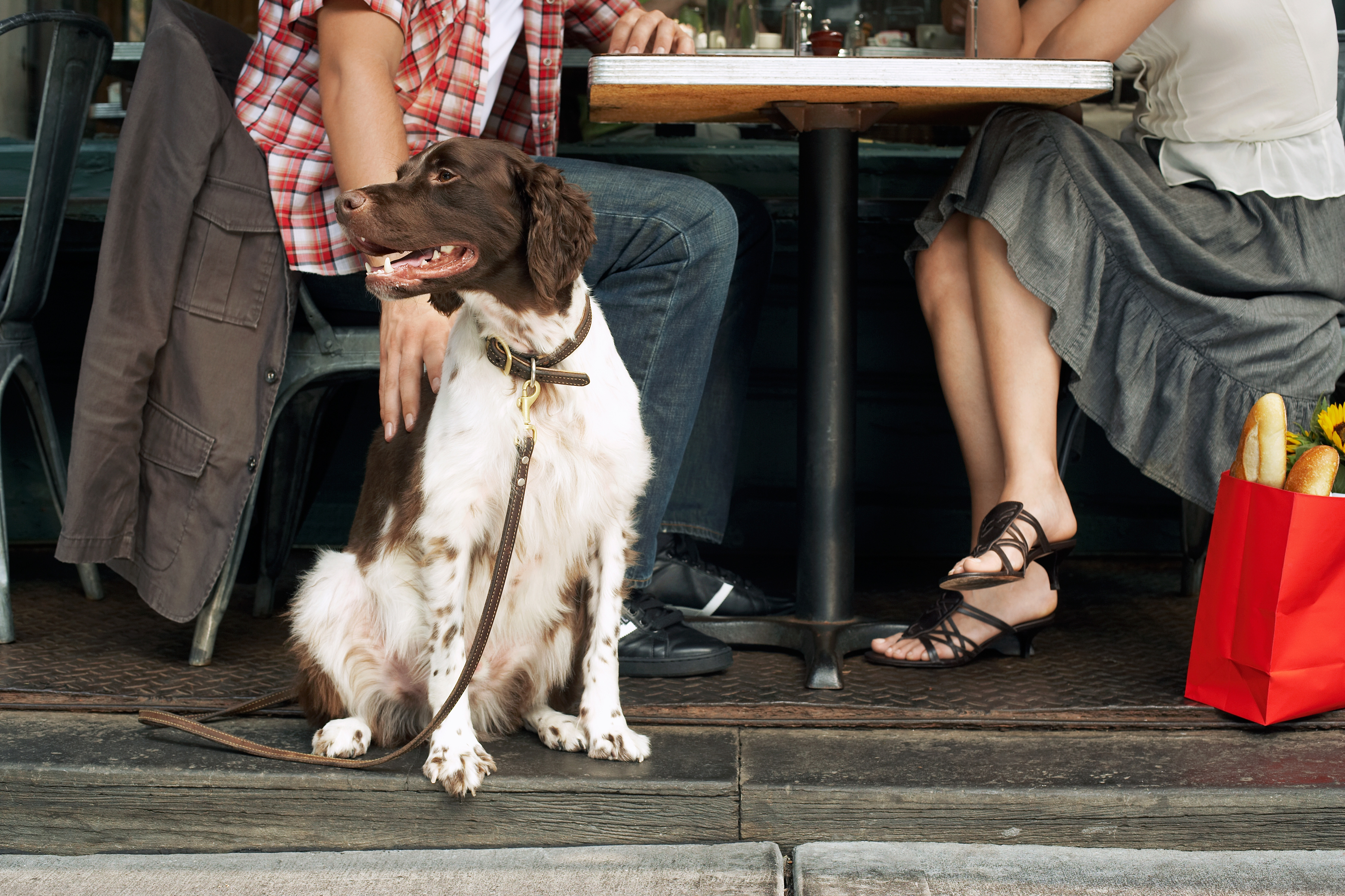Ensuring Food Safety and Building Customer Loyalty in Dog-friendly Restaurants