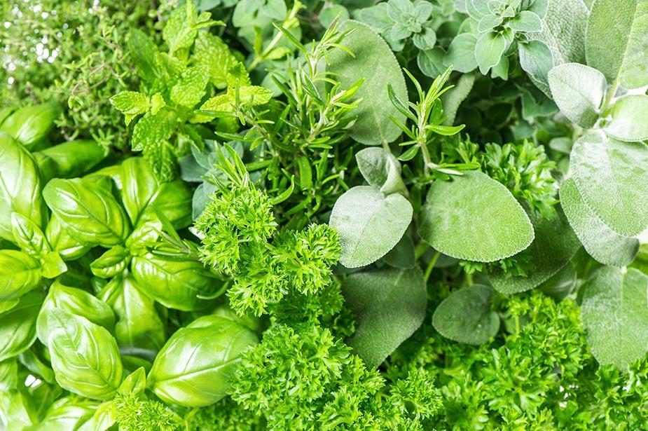 Fresh produce most often root cause of foodborne illness