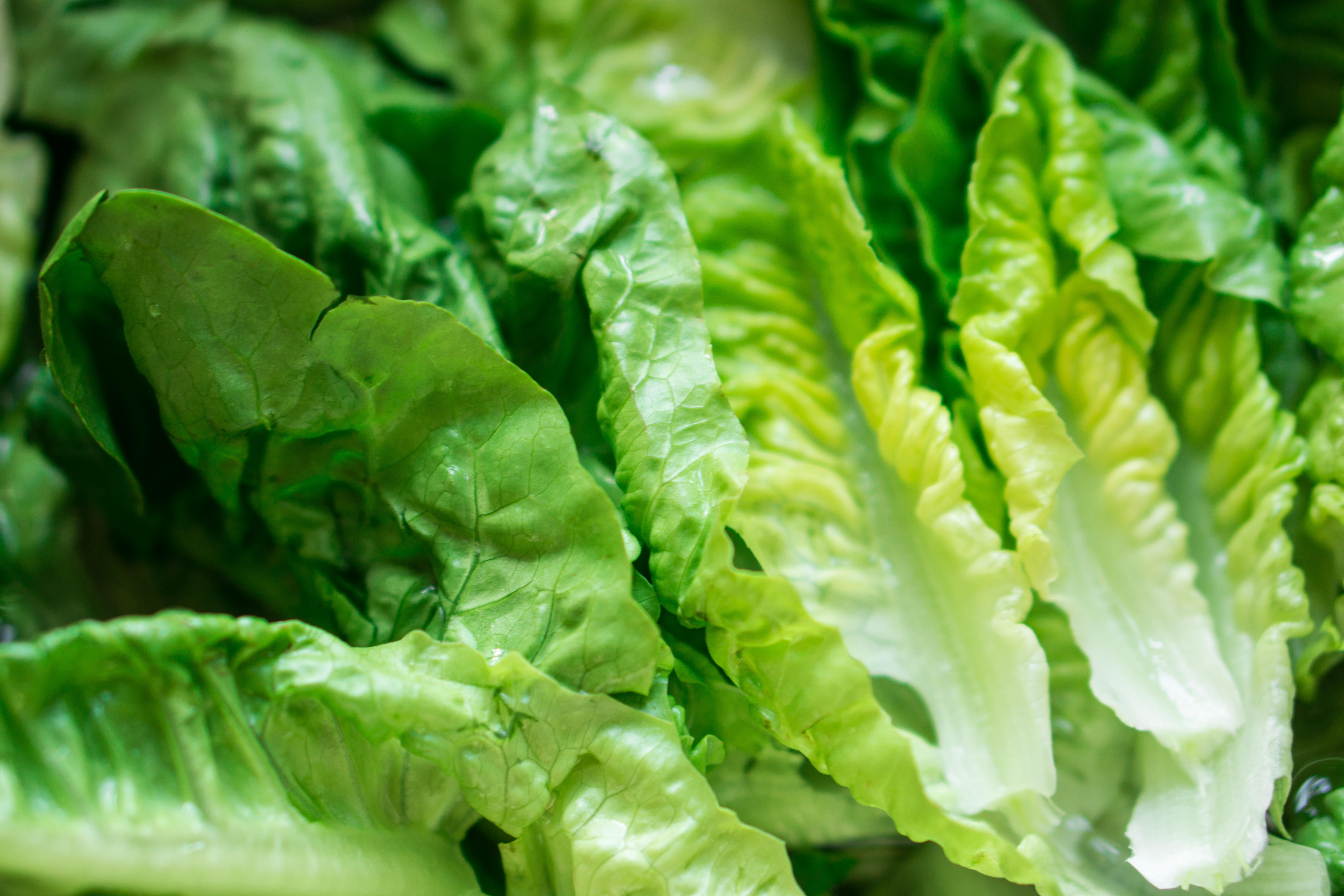 In Wake of Romaine Lettuce Recall, FoodLogiQ Shares Thoughts on the Importance of Supply Chain Management and Food Traceability